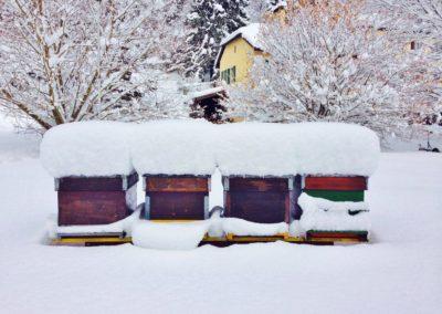 abeilles hiver 1