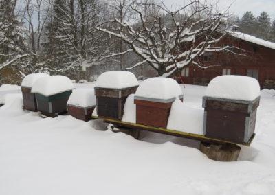 hiver IMG_1006